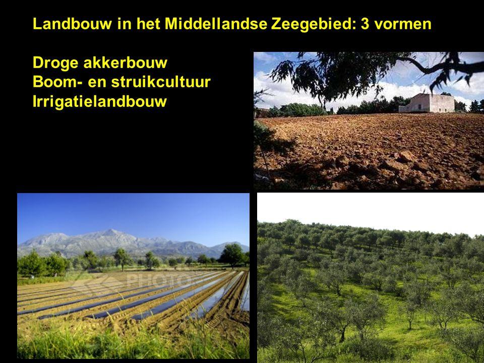 Landbouw in het Middellandse Zeegebied: 3 vormen