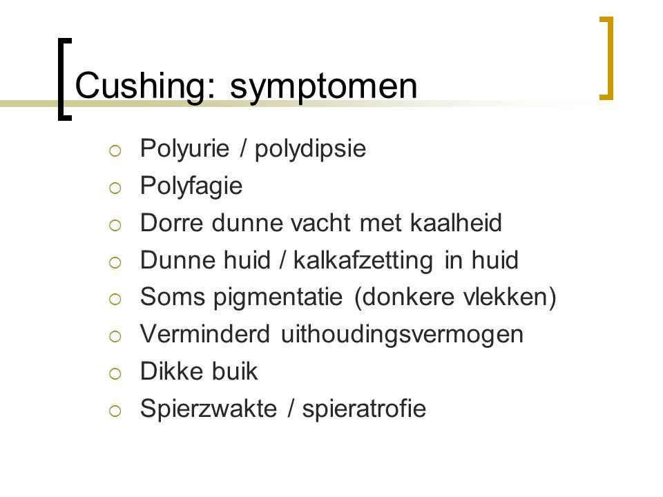 Cushing: symptomen Polyurie / polydipsie Polyfagie