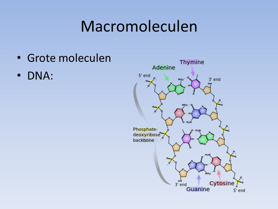 Macromoleculen Grote moleculen DNA: