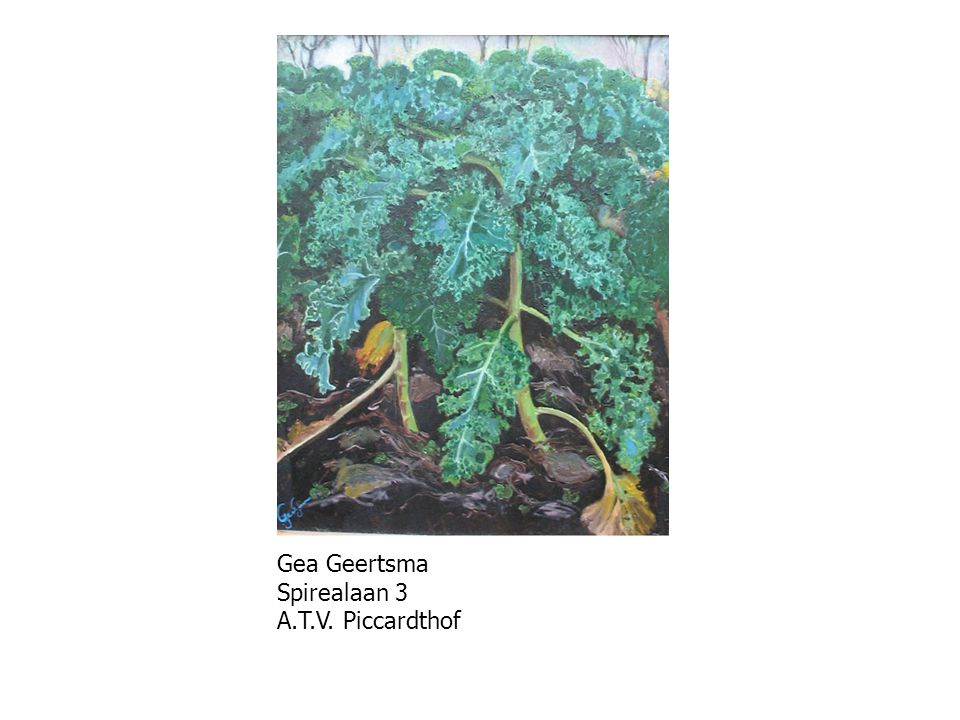 Gea Geertsma Spirealaan 3 A.T.V. Piccardthof