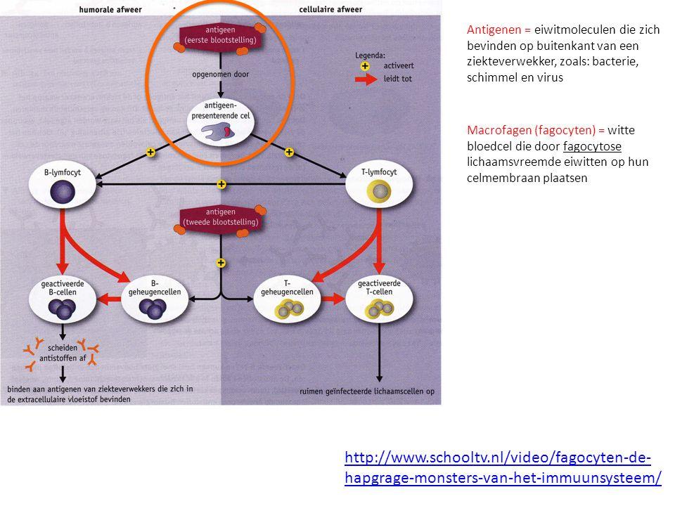 Antigenen = eiwitmoleculen die zich bevinden op buitenkant van een ziekteverwekker, zoals: bacterie, schimmel en virus