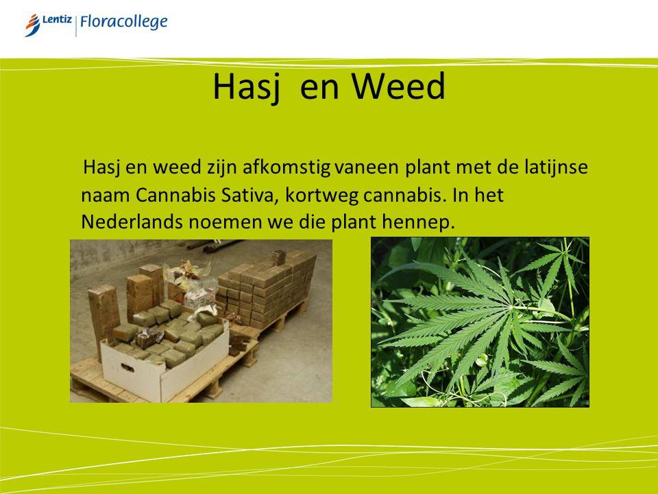 Hasj en Weed