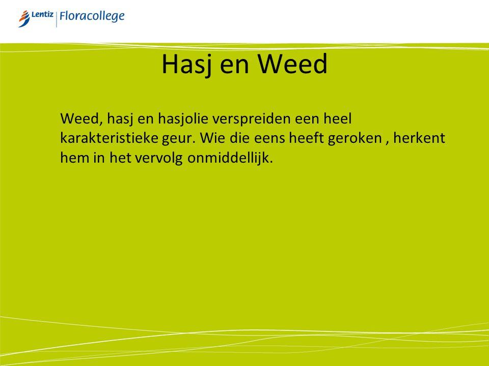 Hasj en Weed Weed, hasj en hasjolie verspreiden een heel karakteristieke geur.