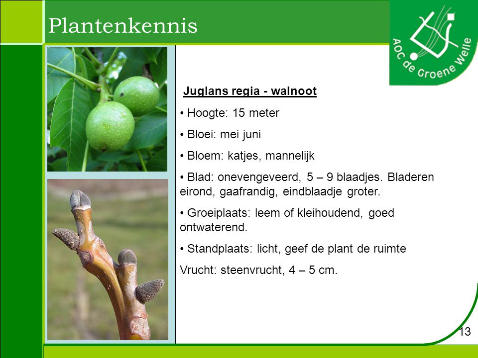 Plantenkennis Juglans regia - walnoot Hoogte: 15 meter Bloei: mei juni