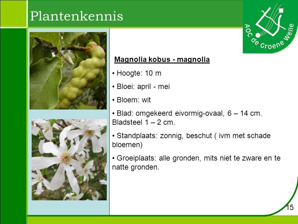 Plantenkennis Magnolia kobus - magnolia Hoogte: 10 m
