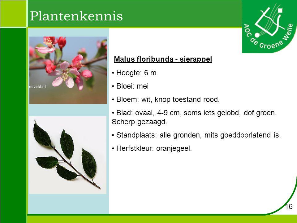 Plantenkennis Malus floribunda - sierappel Hoogte: 6 m. Bloei: mei
