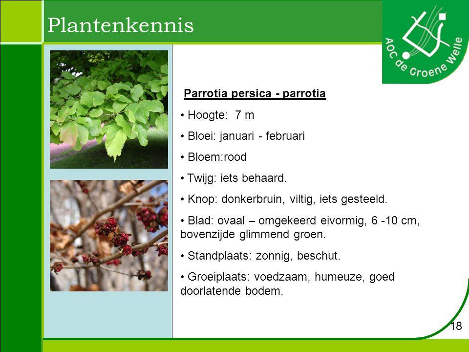 Plantenkennis Parrotia persica - parrotia Hoogte: 7 m