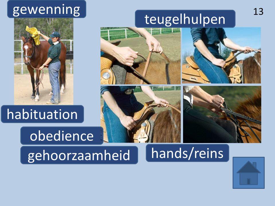gewenning teugelhulpen habituation obedience hands/reins gehoorzaamheid