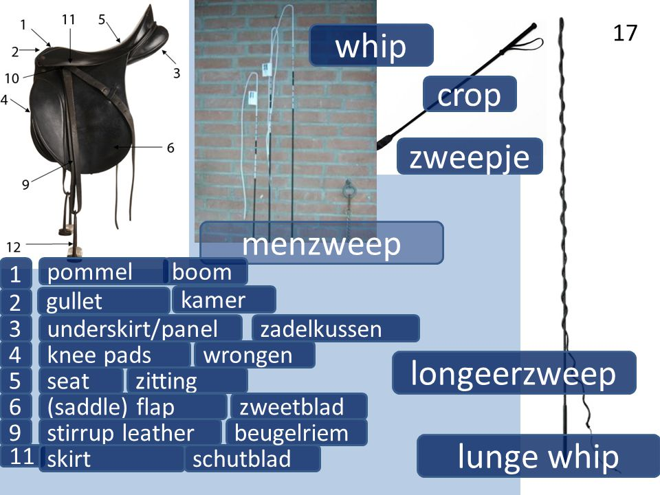 whip crop zweepje menzweep longeerzweep lunge whip 1 pommel boom 2
