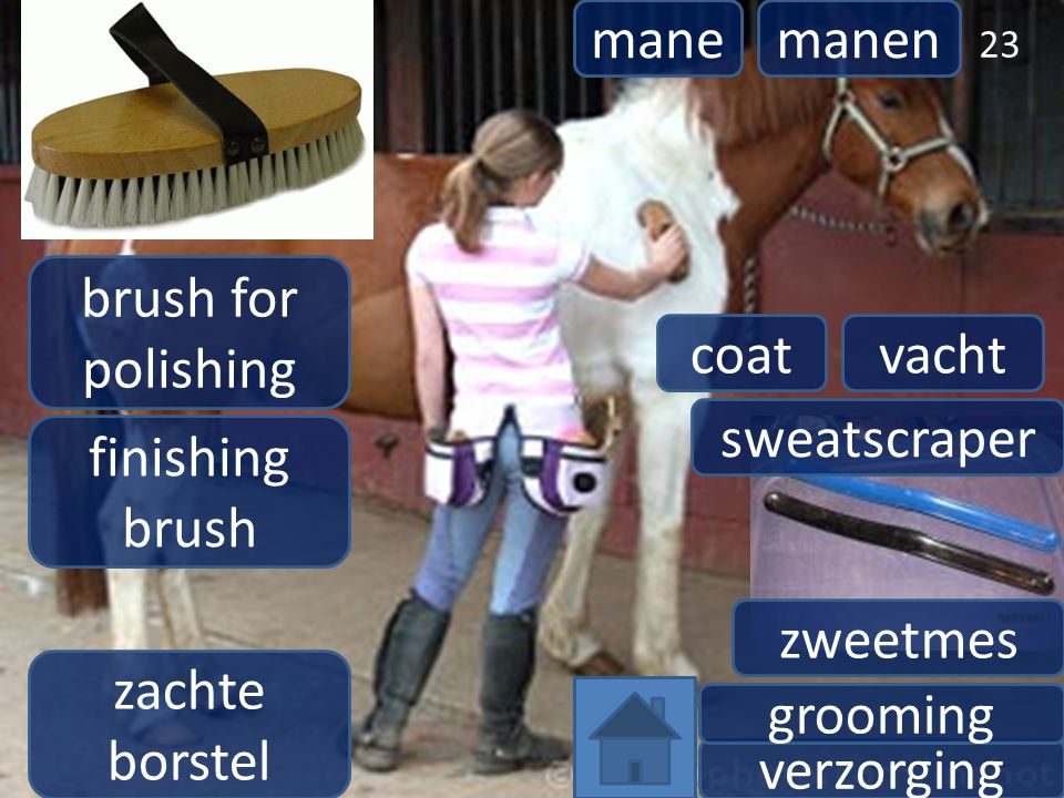mane manen. brush for polishing. coat. vacht. sweatscraper. finishing brush. zweetmes. zachte borstel.