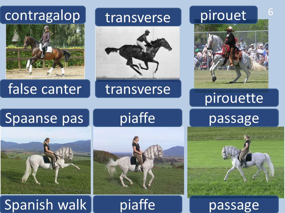 contragalop pirouet. transverse. false canter. transverse. pirouette. Spaanse pas. piaffe. passage.