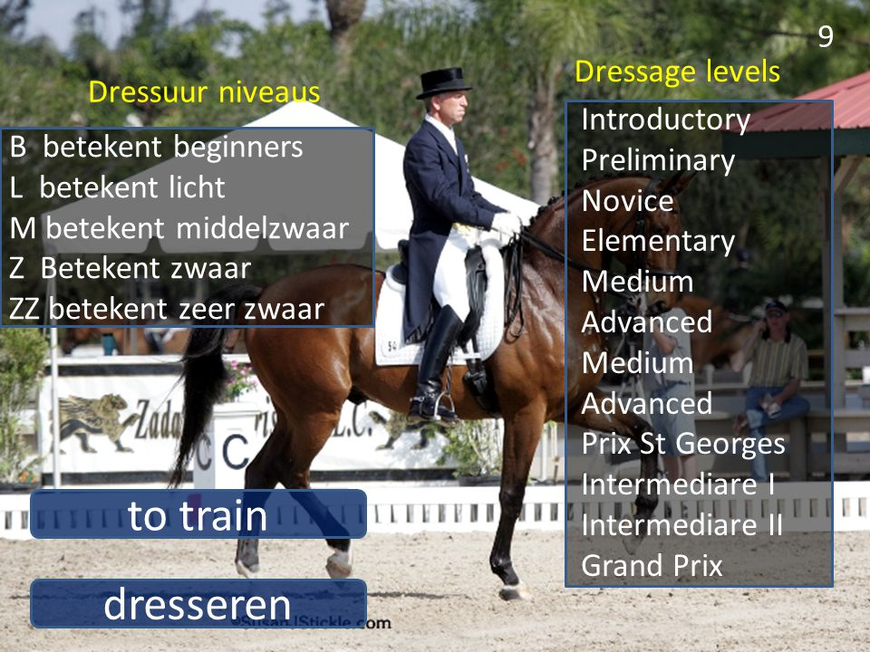 to train dresseren Dressage levels Dressuur niveaus