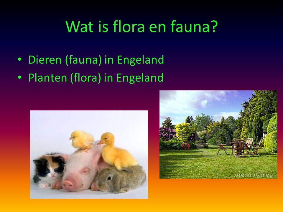 Wat is flora en fauna Dieren (fauna) in Engeland