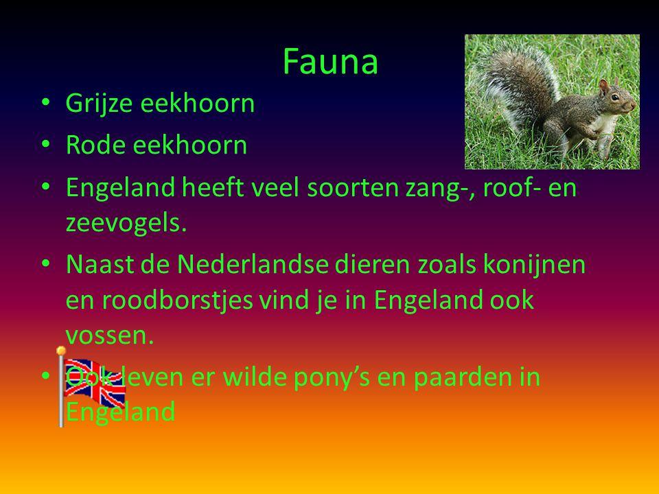 Fauna Grijze eekhoorn Rode eekhoorn