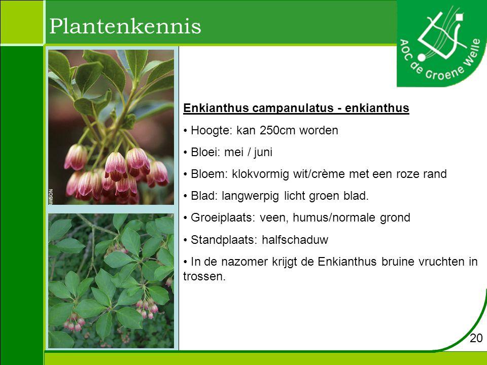 Plantenkennis Enkianthus campanulatus - enkianthus