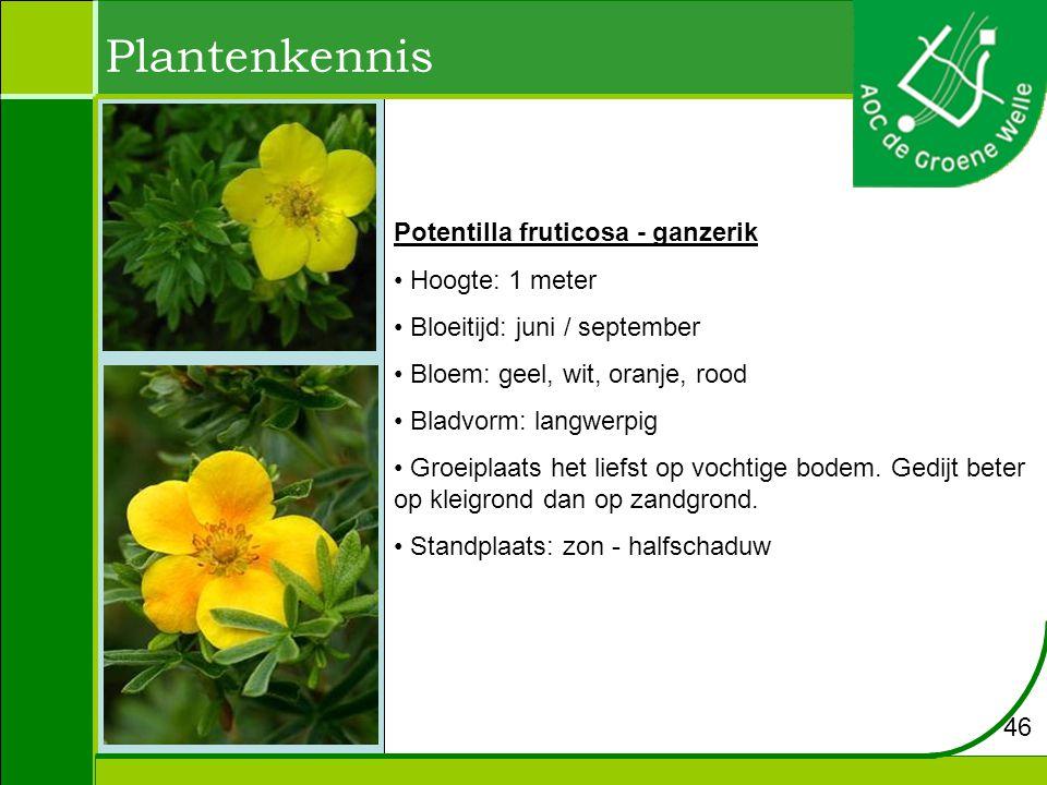 Plantenkennis Potentilla fruticosa - ganzerik Hoogte: 1 meter