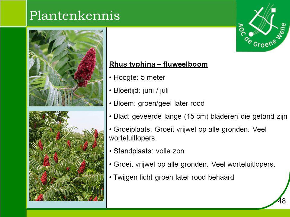 Plantenkennis Rhus typhina – fluweelboom Hoogte: 5 meter