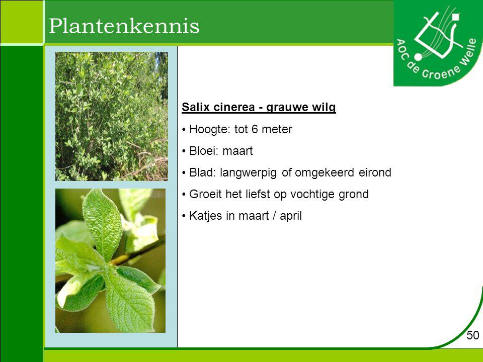 Plantenkennis Salix cinerea - grauwe wilg Hoogte: tot 6 meter
