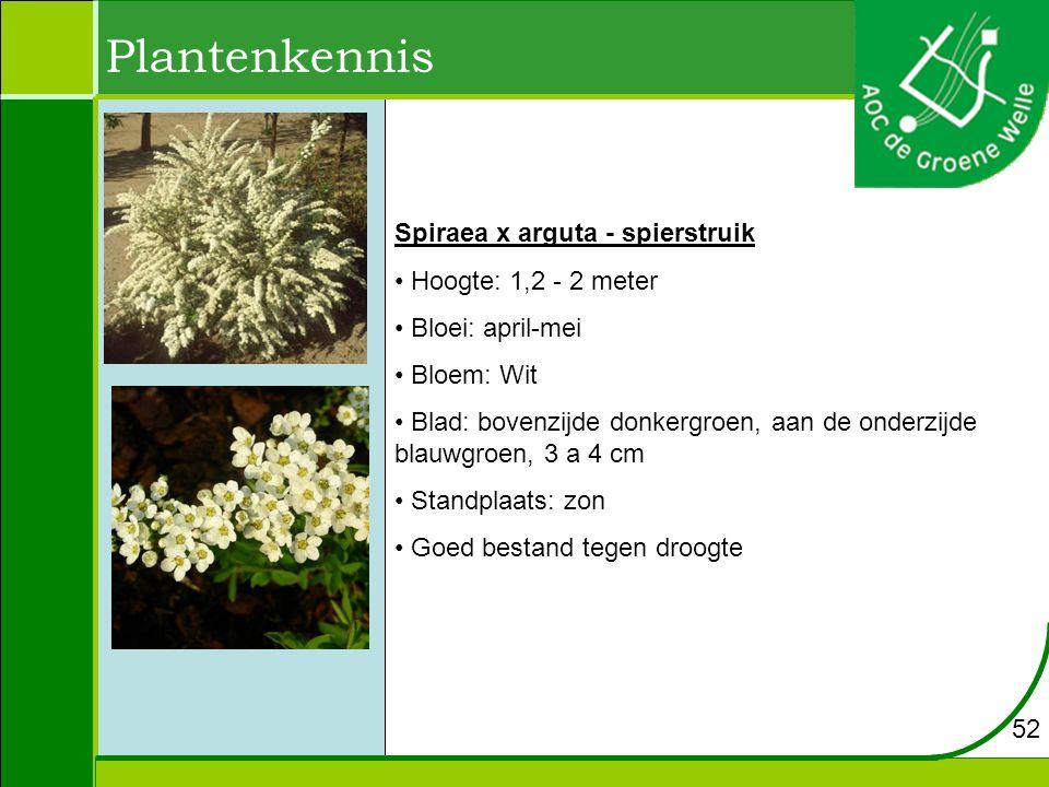 Plantenkennis Spiraea x arguta - spierstruik Hoogte: 1,2 - 2 meter