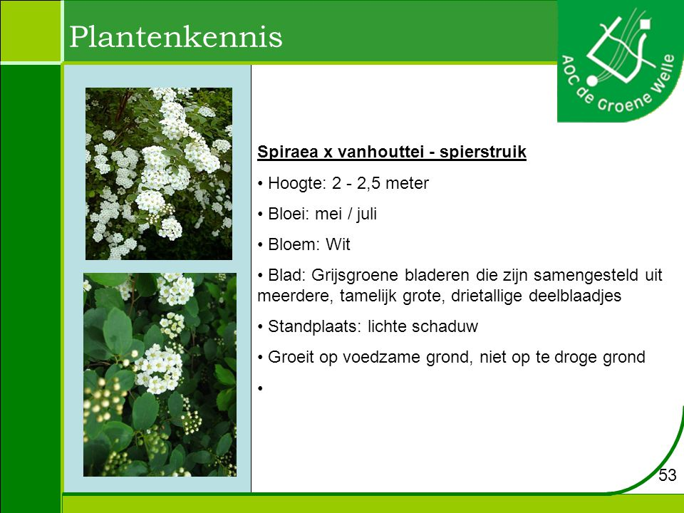 Plantenkennis Spiraea x vanhouttei - spierstruik Hoogte: 2 - 2,5 meter