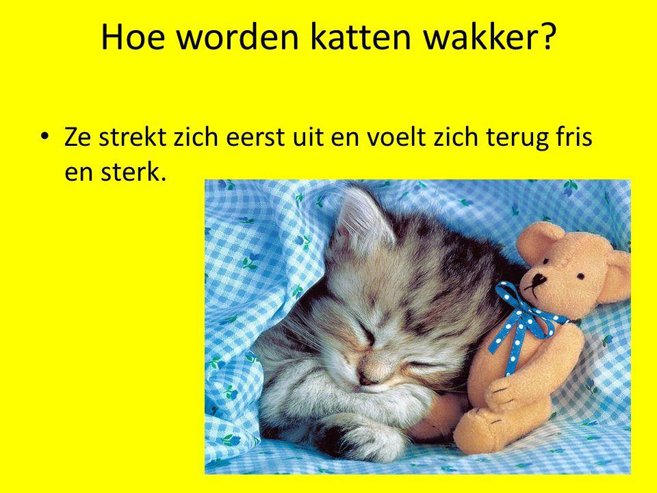 Hoe worden katten wakker