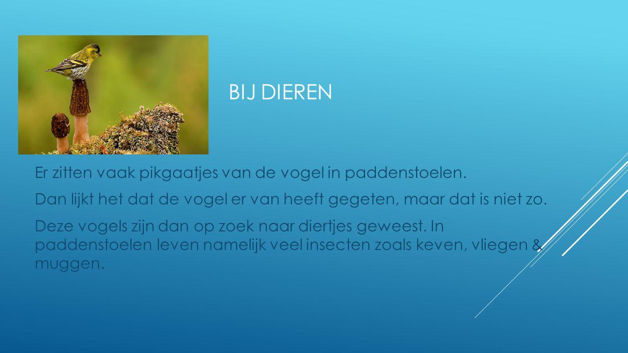 bij dieren Er zitten vaak pikgaatjes van de vogel in paddenstoelen.