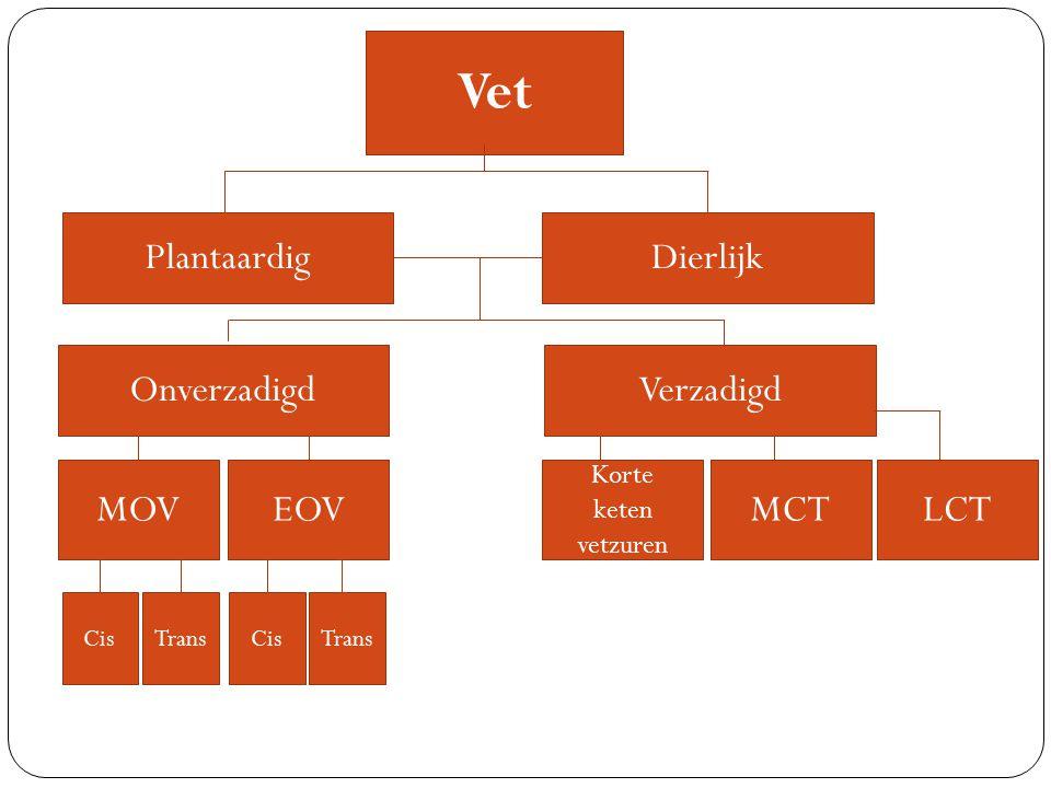 Vet Plantaardig Dierlijk Onverzadigd Verzadigd MOV EOV MCT LCT