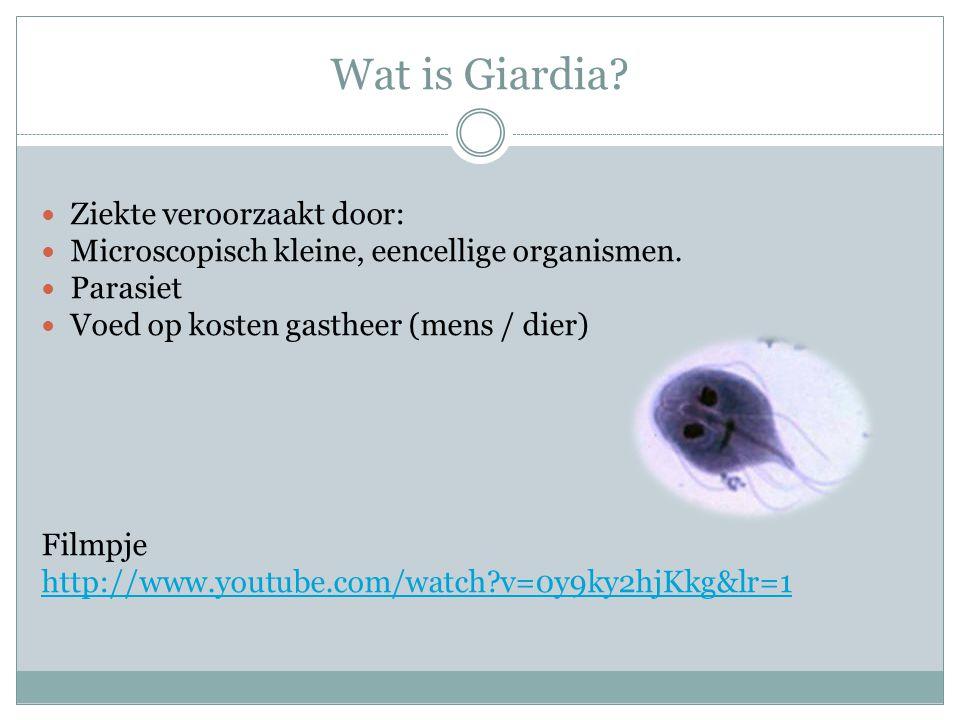 Wat is Giardia Ziekte veroorzaakt door: