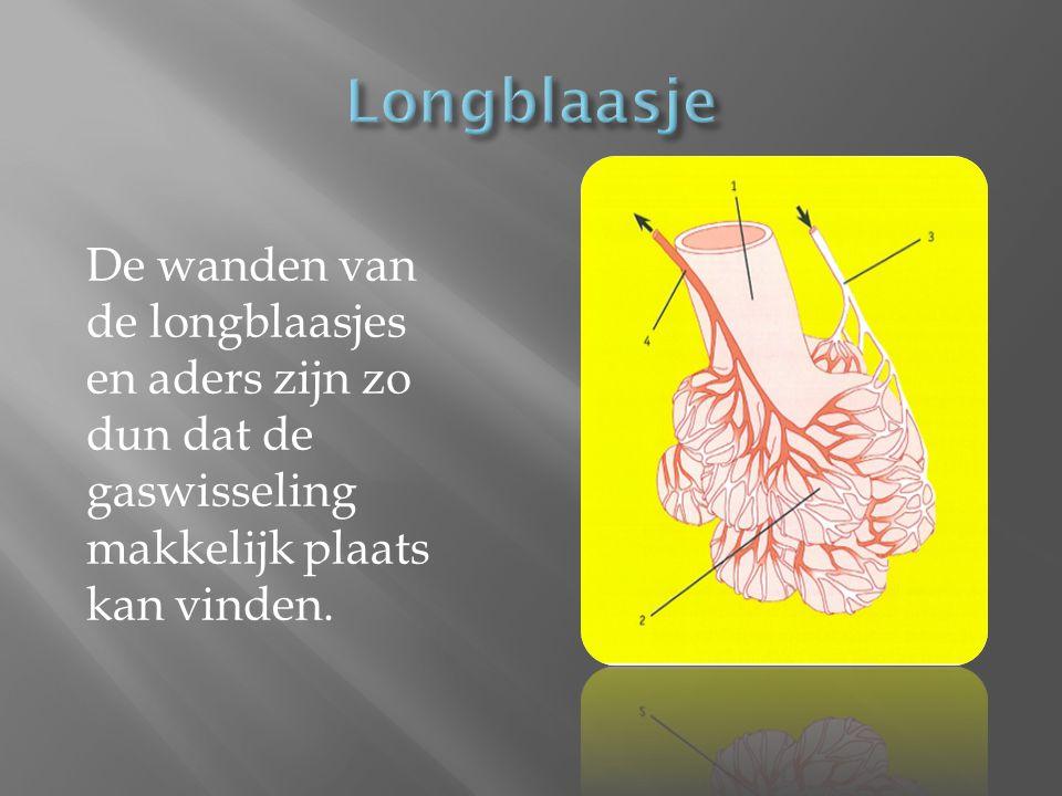 Longblaasje De wanden van de longblaasjes en aders zijn zo dun dat de gaswisseling makkelijk plaats kan vinden.