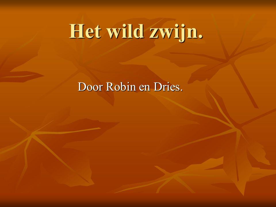 Het wild zwijn. Door Robin en Dries.