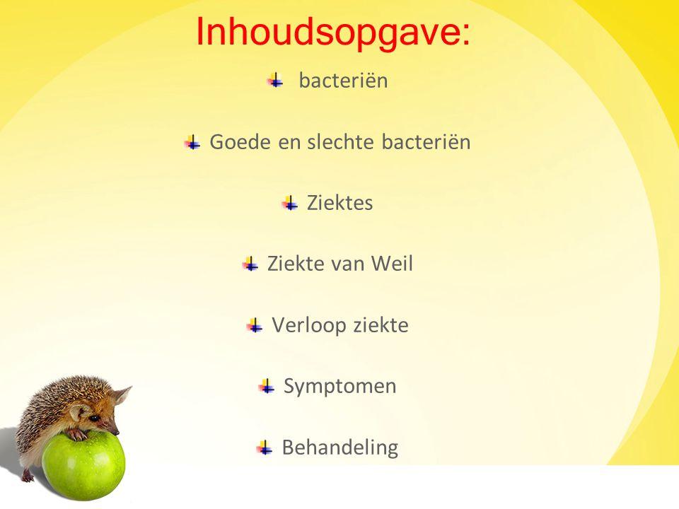 Goede en slechte bacteriën