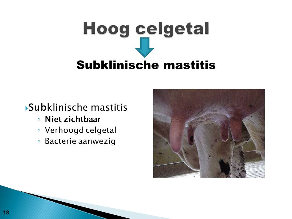 Subklinische mastitis