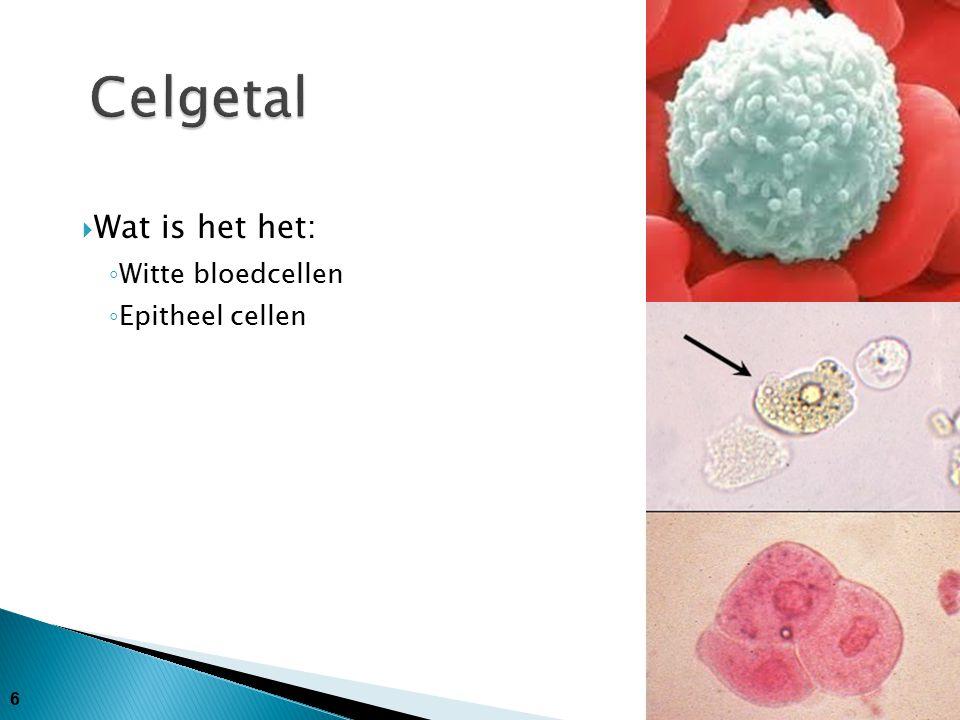 Celgetal Wat is het het: Witte bloedcellen Epitheel cellen