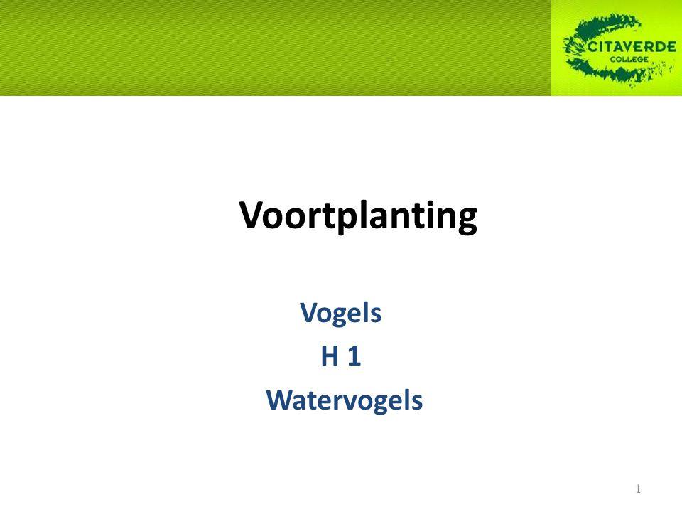 Voortplanting Vogels H 1 Watervogels