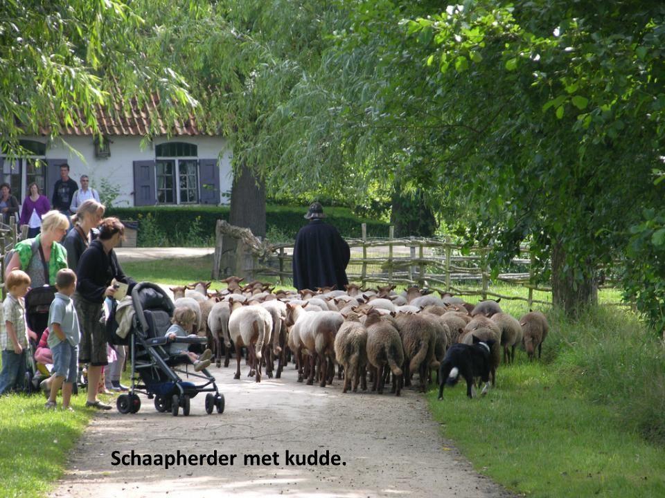 Schaapherder met kudde.