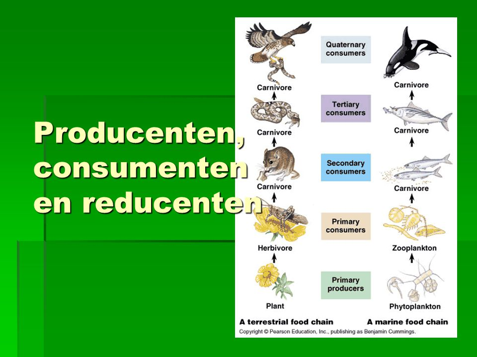 Producenten, consumenten en reducenten