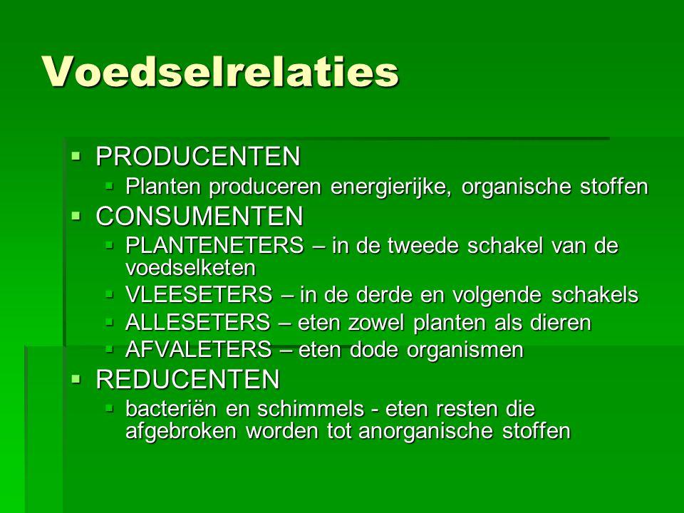 Voedselrelaties PRODUCENTEN CONSUMENTEN REDUCENTEN
