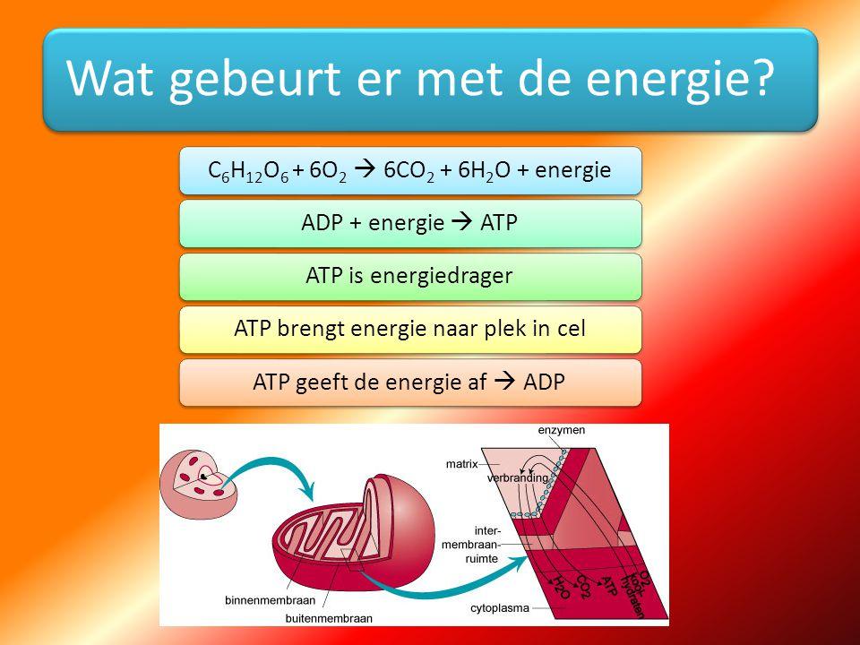Wat gebeurt er met de energie