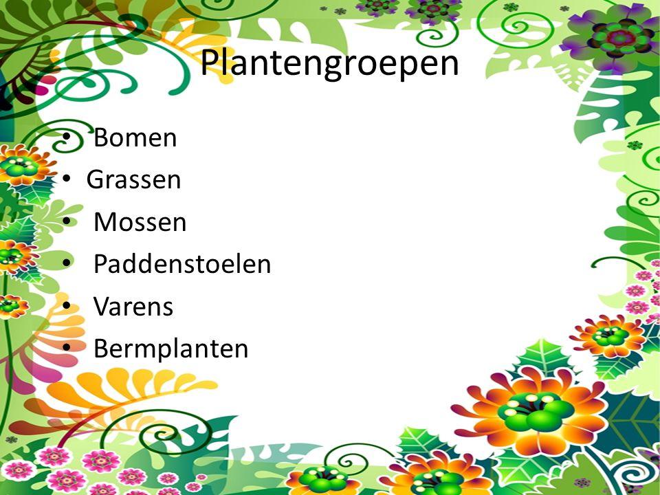 Plantengroepen Bomen Grassen Mossen Paddenstoelen Varens Bermplanten