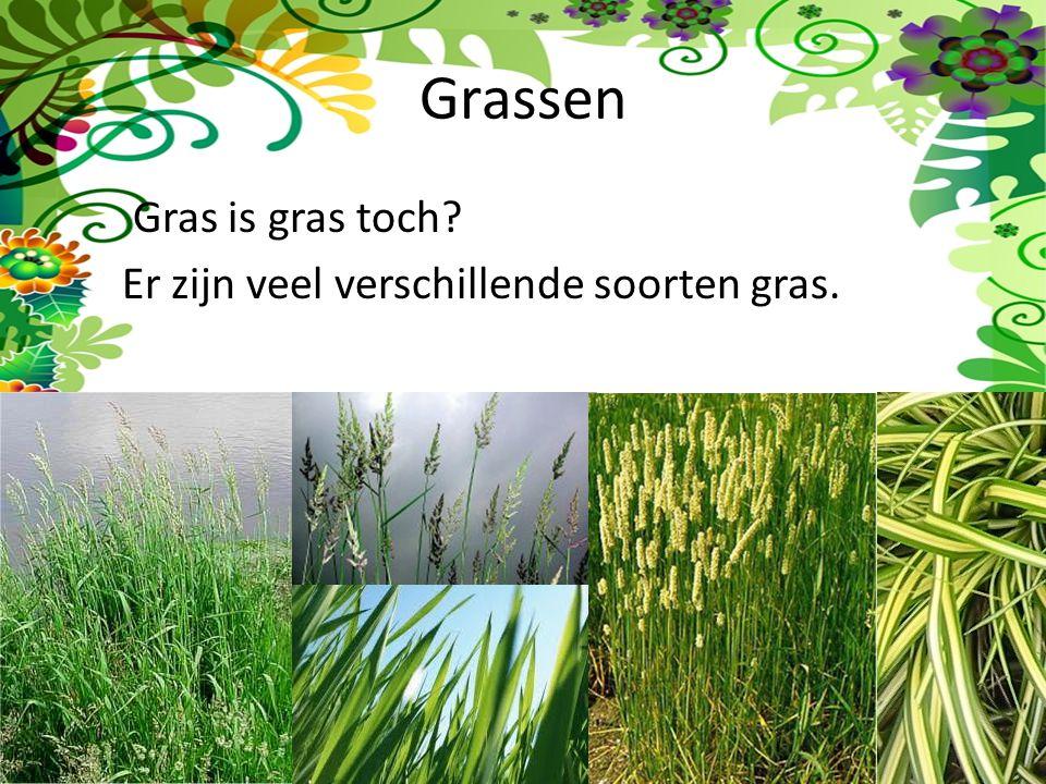 Grassen Gras is gras toch Er zijn veel verschillende soorten gras.