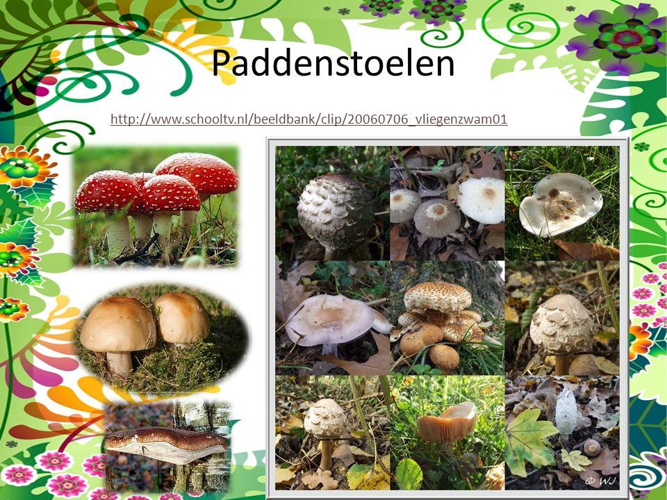 Paddenstoelen http://www.schooltv.nl/beeldbank/clip/20060706_vliegenzwam01