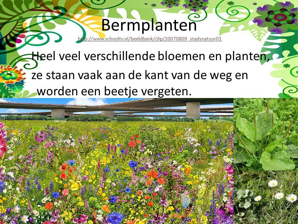 Bermplanten http://www. schooltv