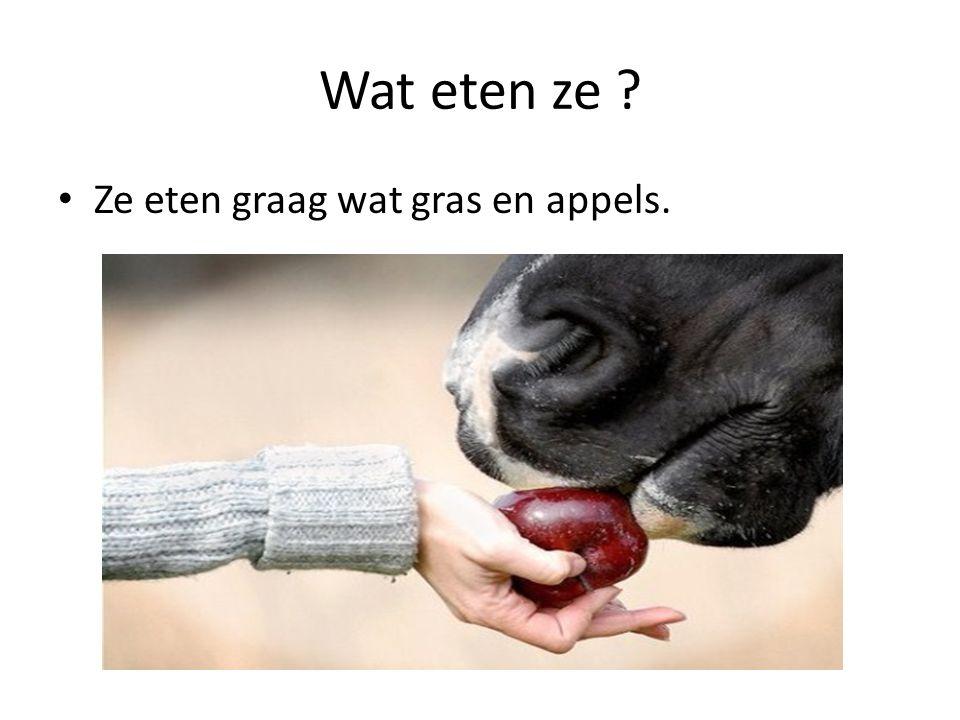 Wat eten ze Ze eten graag wat gras en appels.