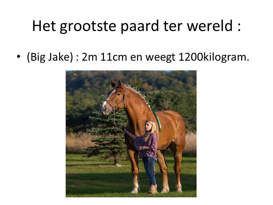 Het grootste paard ter wereld :