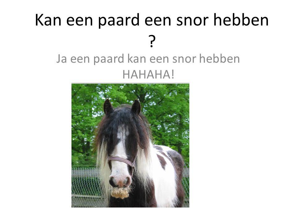 Kan een paard een snor hebben