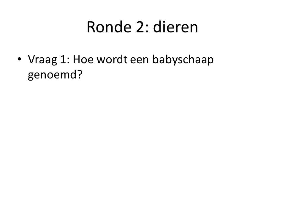 Ronde 2: dieren Vraag 1: Hoe wordt een babyschaap genoemd