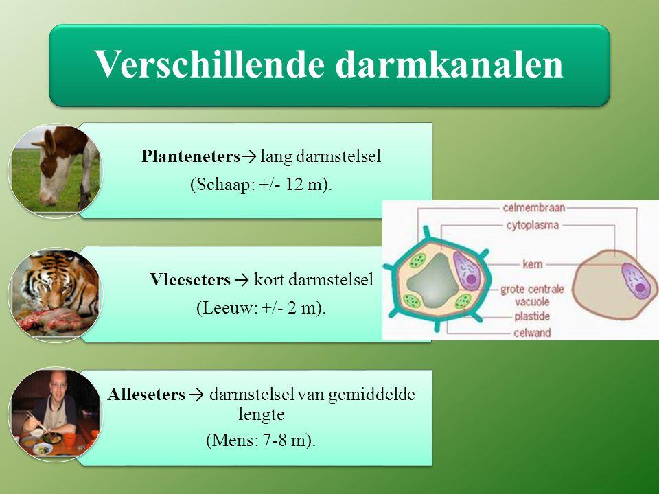 Verschillende darmkanalen