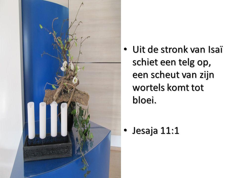 Uit de stronk van Isaï schiet een telg op, een scheut van zijn wortels komt tot bloei.