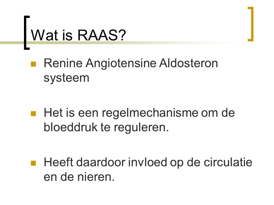 Wat is RAAS Renine Angiotensine Aldosteron systeem