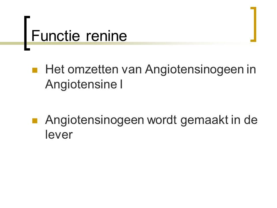Functie renine Het omzetten van Angiotensinogeen in Angiotensine I